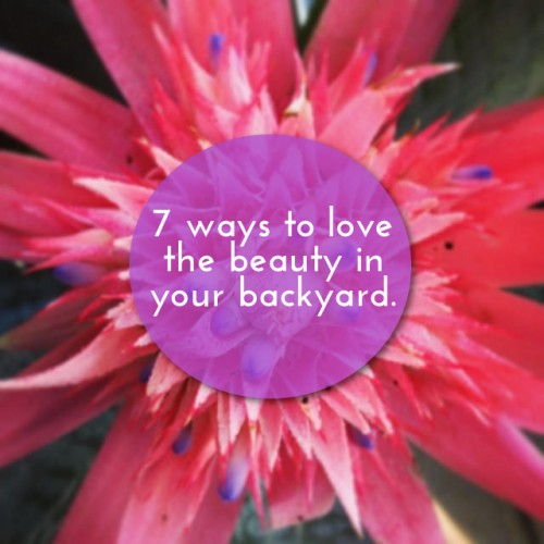 Love Your Ordinary: Backyard Beauty